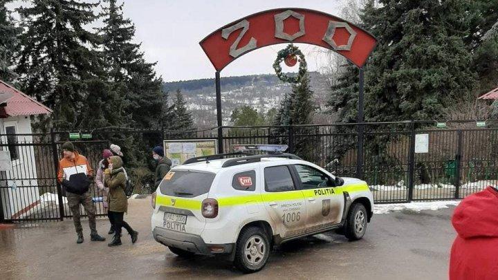 Нападение тигра на человека: в Инспекции труда назвали предварительную причину инцидента в зоопарке