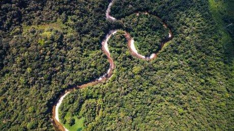 Сотни гектаров лесов Амазонии незаконно продают в Facebook