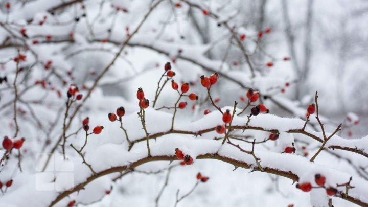 Помочь пережить холода: специалисты подсказали, чем подкармливать диких птиц зимой