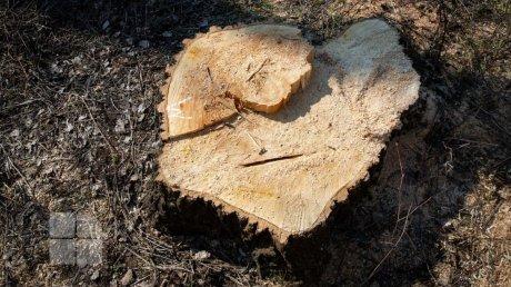 Кража древесины из Днестровского парка в Вадул-луй-Водэ стала уголовным делом