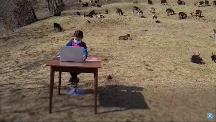 Учёба под открытым небом: 10-летняя девочка подключается к урокам с пастбища