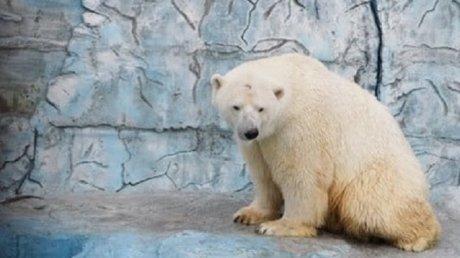 В зоопарке Екатеринбурга медведь умер, проглотив резиновый мяч