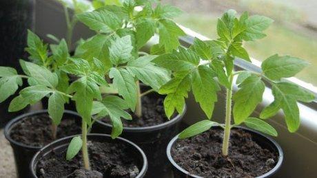 В продаже появилась первая рассада - от овощных культур до саженцев деревьев и ягодных кустов