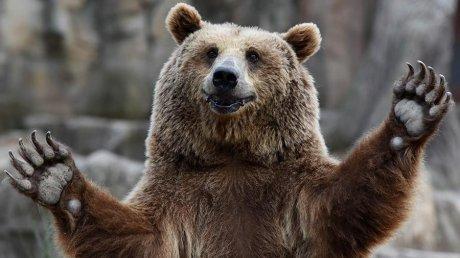 Кандидат в губернаторы Калифорнии проводит свою кампанию в сопровождении медведя