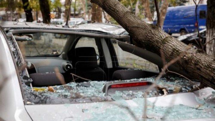 ШОК! В столице дерево рухнуло на машину, пробив лобовое стекло (ФОТО)