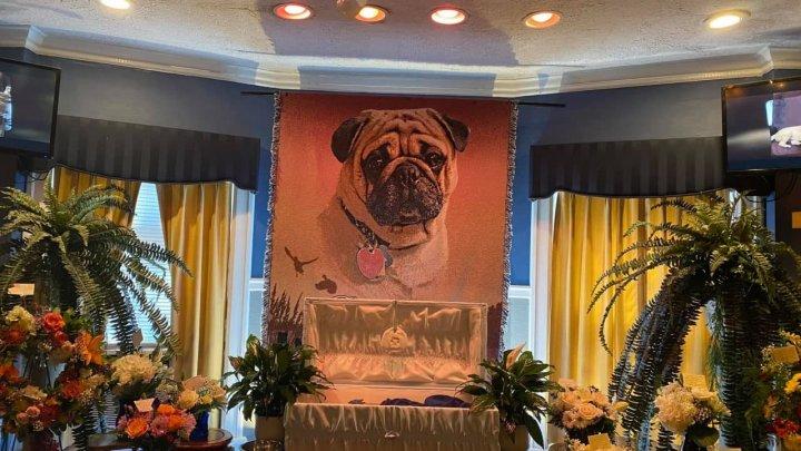 У попа была собака: в США пастор устроил роскошные похороны для своего мопса (ФОТО)