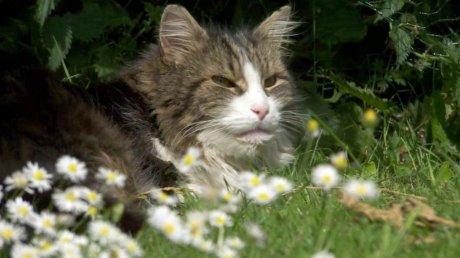 """Пропавший кот вернулся домой после своей """"кремации"""""""
