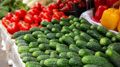 В выигрыше лишь перекупщики: производители овощей грозят свернуть бизнес и скормить продукцию домашней птице