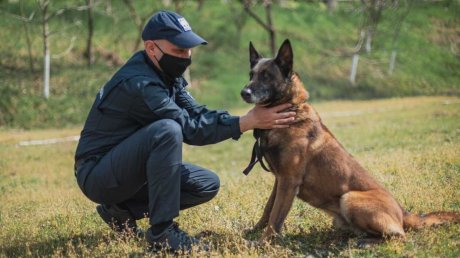 Cлужебная собака по кличке Рада вывела на след вора в Ниспоренском районе