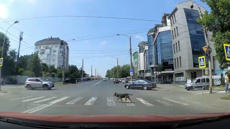 """Самый дисциплинированный """"пешеход"""" попал на камеру в Кишинёве (ВИДЕО)"""