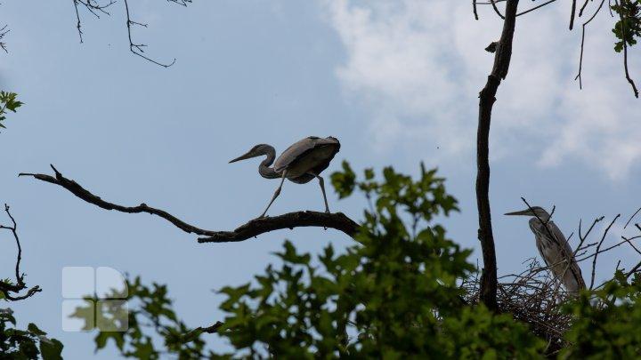 Страна цапель: в 185 километрах от Кишинёва раскинулось настоящее птичье царство (FOTOREPORT)