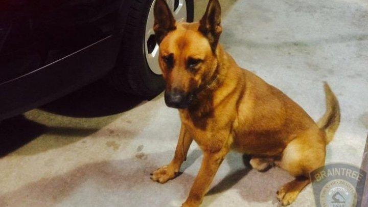 В США с почестями похоронили героически погибшего полицейского пса