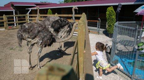 Супруги из Садаклии открыли дома мини-зоопарк: здесь живут дикобразы, а фазан дружит с оленёнком (ФОТОРЕПОРТАЖ)