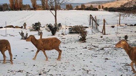 Зима в разгар лета: в южноафриканском городе Кимберли выпал снег