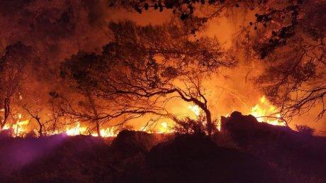 На острове Родос разгорелся сильный лесной пожар