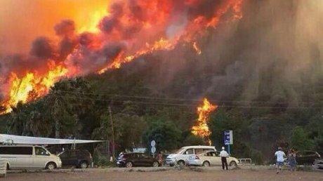 В Турции пятый день тушат лесные пожары: число жертв выросло до 10