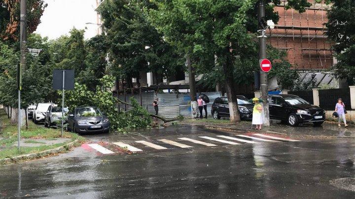 Как ливануло: непогода в Кишинёве поломала ветки деревьев (ФОТО)
