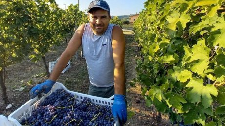 Три сезона работает мэром, а осенью собирает виноград в Италии: история главы администрации села Заим