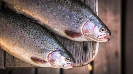Рыбное дело позволило раскрутить и другой бизнес: история семьи фермеров из Окницкого района