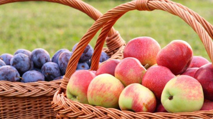 Фермеры жалуются на отсутствие сбыта яблок и сливы: реакция Минсельхоза