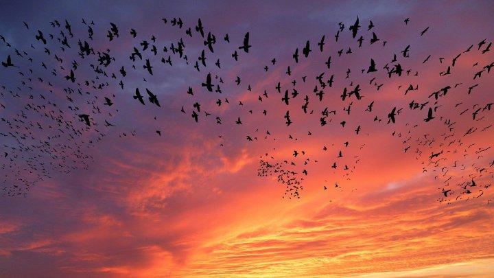 Найдена причина ежегодной гибели тысяч птиц в Европе и Америке