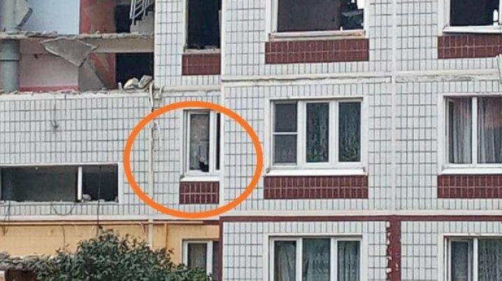 """Домашние животные уже 18 дней ждут спасения из разрушенной взрывом многоэтажки в Ногинске: """"Хозяева смотрят на них через забор и плачут"""""""